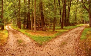 fork-in-the-road-forest