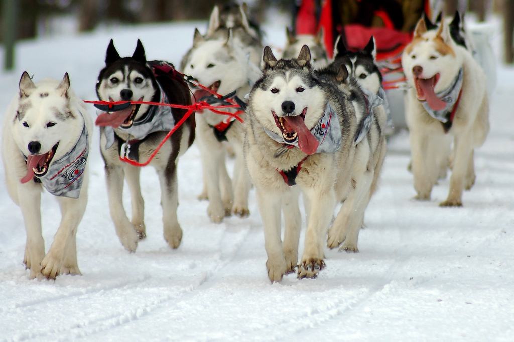 Best Boots For Dog Sledding