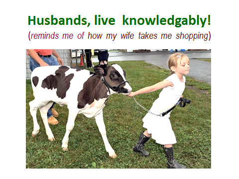 going-shopping-livestock-show-analogy