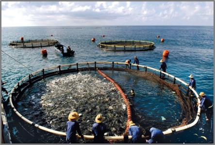 Indonesia-aquaculture.offshore-netpens.png