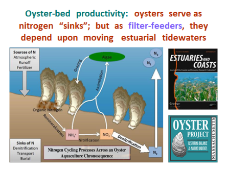 oysters-filterfeeders.PPT-need-moon-tides