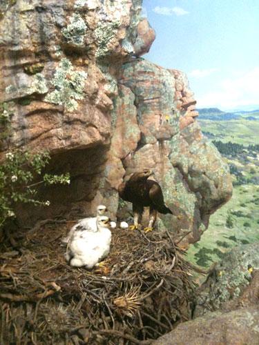 GoldenEagle-nest.high-rocks