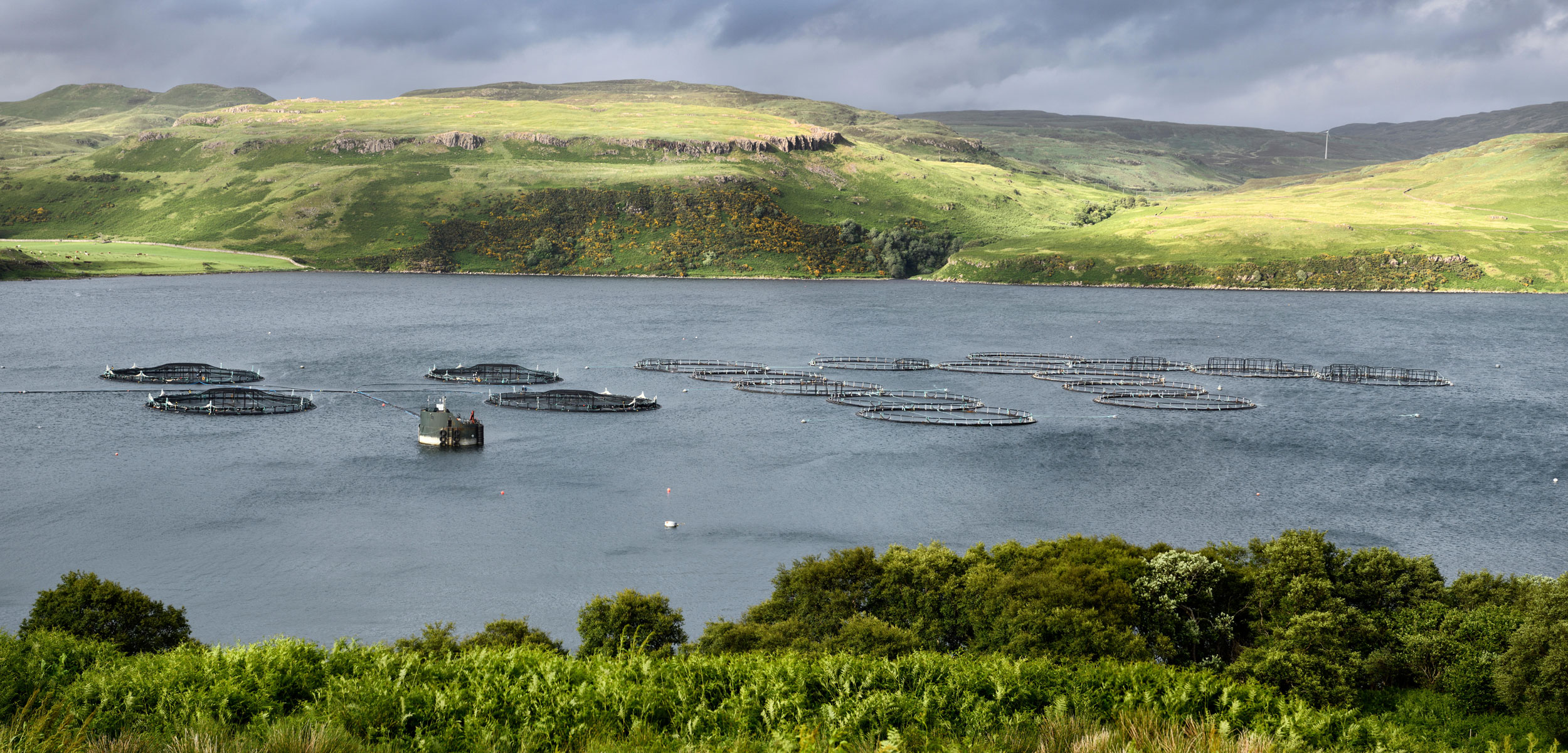 Scottish-salmon.fishfarm-netpens