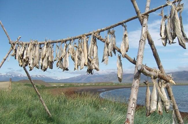 Viking-codfish-drying.rack