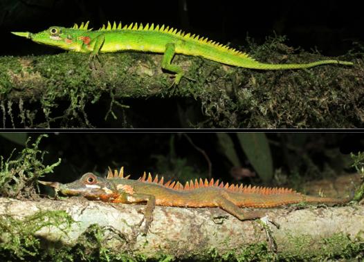 Modigliani-lizard.camouflage-contrast