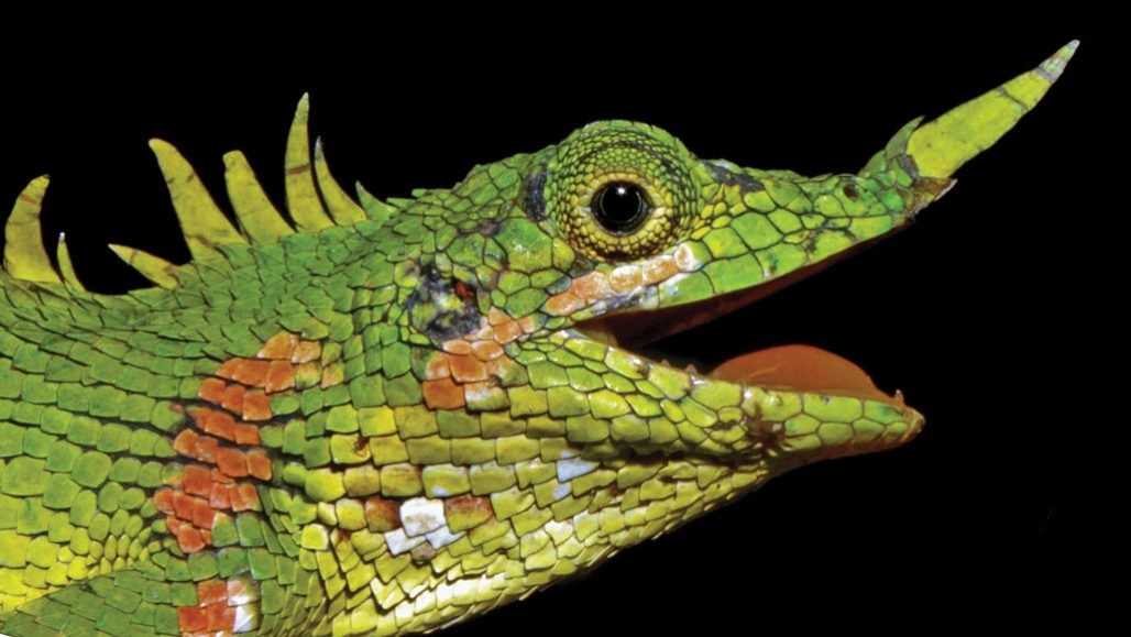 Modigliani-lizard.face-profile-closeup
